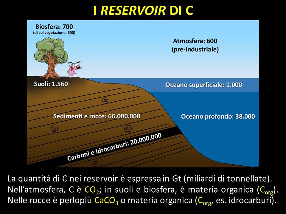 I RESERVOIR DI C La quantità di C nei reservoir è espressa in Gt (miliardi di tonnellate). Nellatmosfera, C è CO 2 ; in suoli e biosfera, è materia or