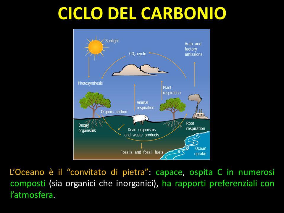 LOceano è il convitato di pietra: capace, ospita C in numerosi composti (sia organici che inorganici), ha rapporti preferenziali con latmosfera.