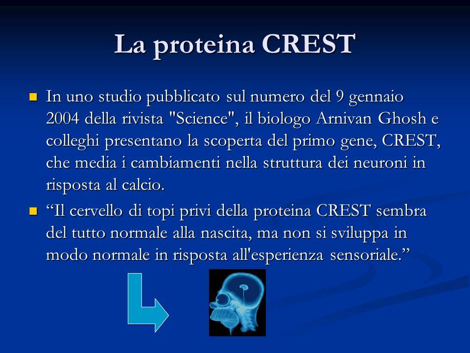 La proteina CREST In uno studio pubblicato sul numero del 9 gennaio 2004 della rivista