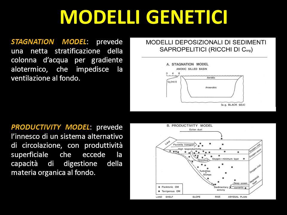 MODELLI GENETICI STAGNATION MODEL: prevede una netta stratificazione della colonna dacqua per gradiente alotermico, che impedisce la ventilazione al f