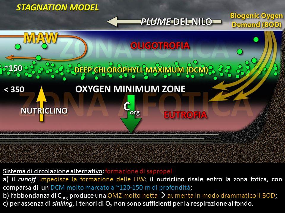 Sistema di circolazione alternativo: formazione di sapropel a) il runoff impedisce la formazione delle LIW: il nutriclino risale entro la zona fotica,