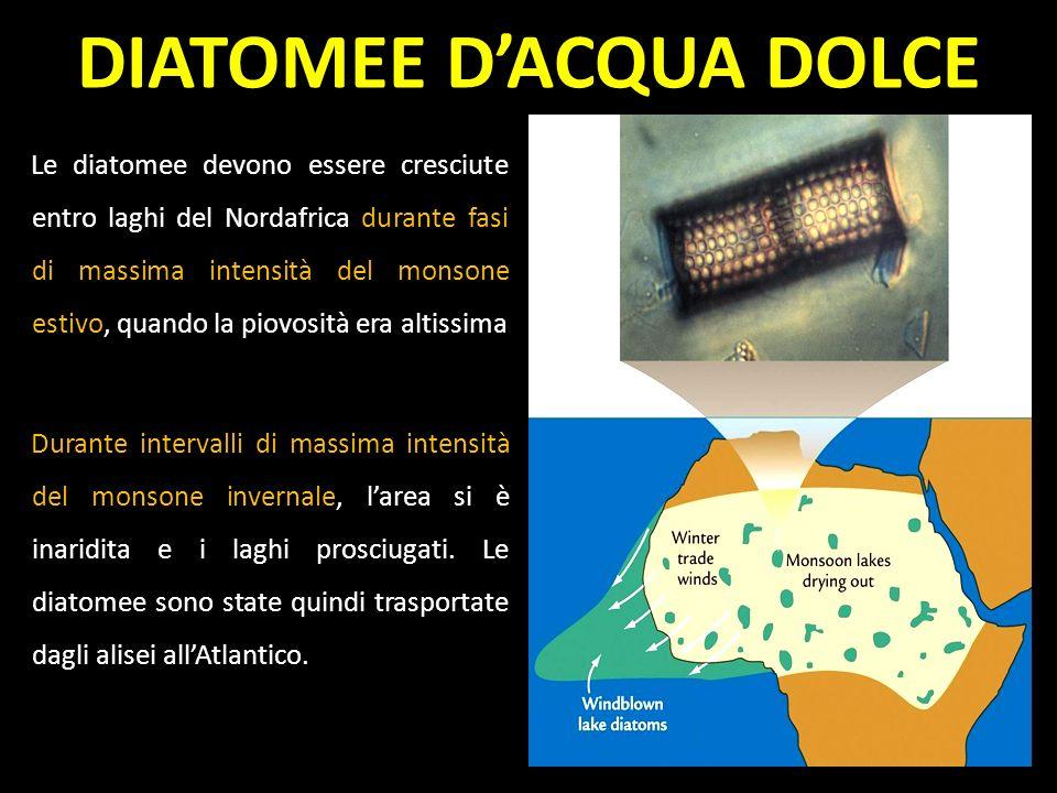 Le diatomee devono essere cresciute entro laghi del Nordafrica durante fasi di massima intensità del monsone estivo, quando la piovosità era altissima