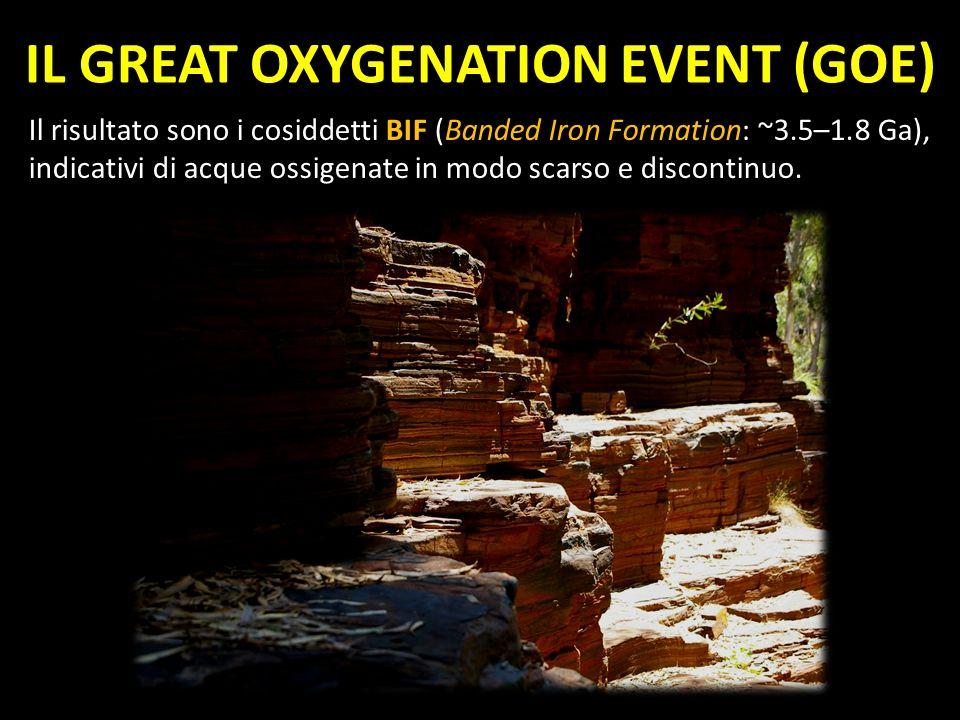 Il risultato sono i cosiddetti BIF (Banded Iron Formation: ~3.5–1.8 Ga), indicativi di acque ossigenate in modo scarso e discontinuo. IL GREAT OXYGENA