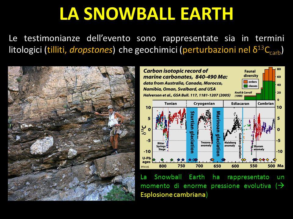 Le testimonianze dellevento sono rappresentate sia in termini litologici (tilliti, dropstones) che geochimici (perturbazioni nel δ 13 C carb ) La Snowball Earth ha rappresentato un momento di enorme pressione evolutiva ( Esplosione cambriana) LA SNOWBALL EARTH