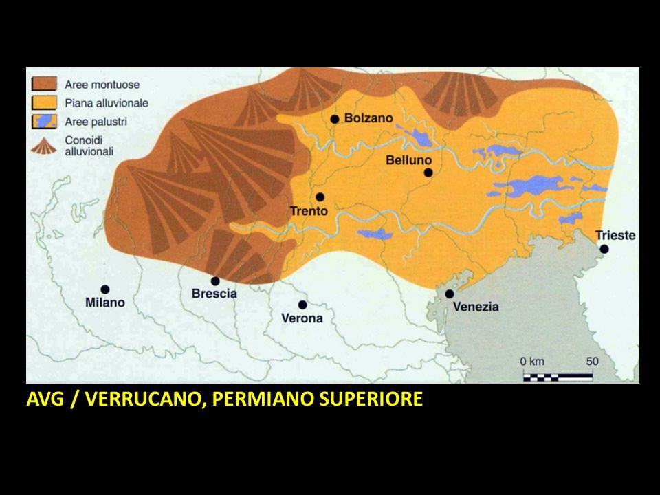 AVG / VERRUCANO, PERMIANO SUPERIORE