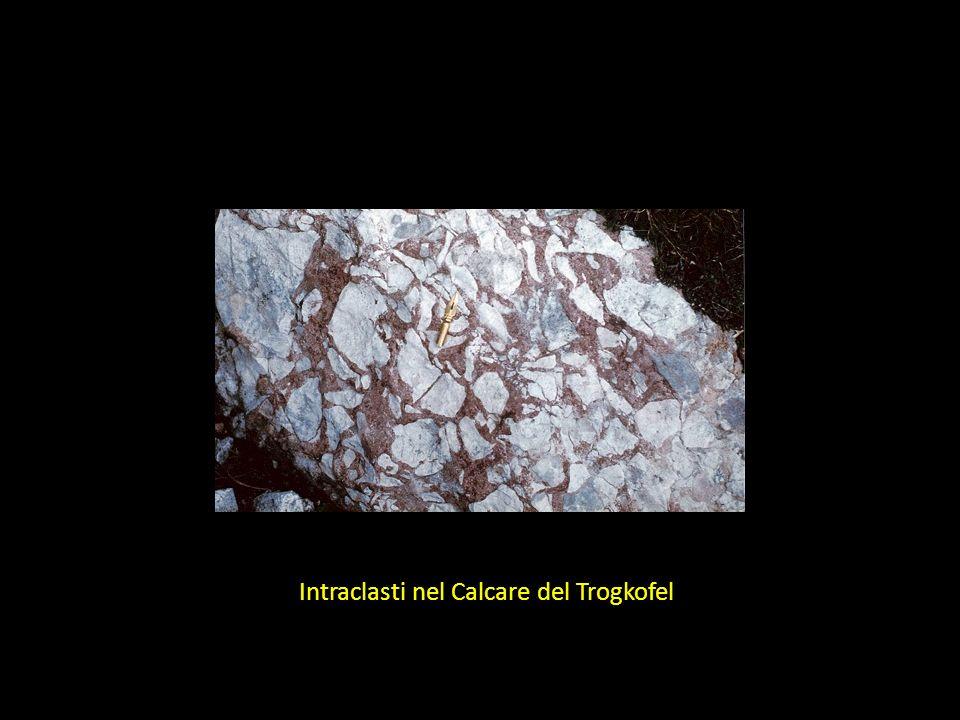 Intraclasti nel Calcare del Trogkofel