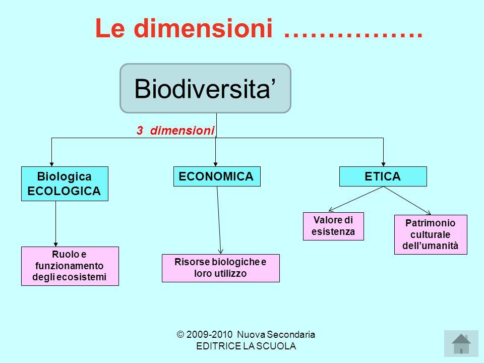 Biodiversità genetica Le differenze di 2 individui della stessa specie sono contenute nel DNA (variazioni specifiche) e provengono dallambiente (selezione naturale).