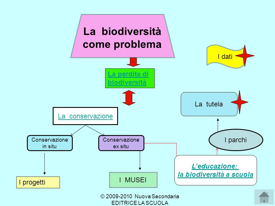 Le cause della perdita di diversità 1.Contrazione degli habitat Contrazione degli habitat 2.