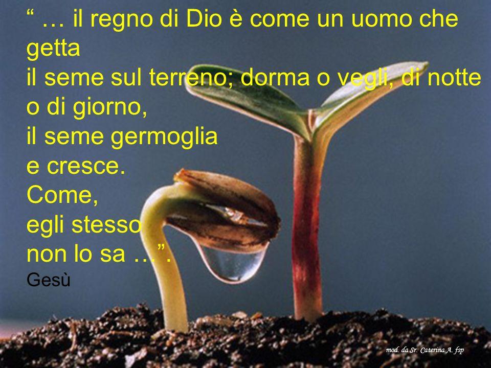 … il regno di Dio è come un uomo che getta il seme sul terreno; dorma o vegli, di notte o di giorno, il seme germoglia e cresce.