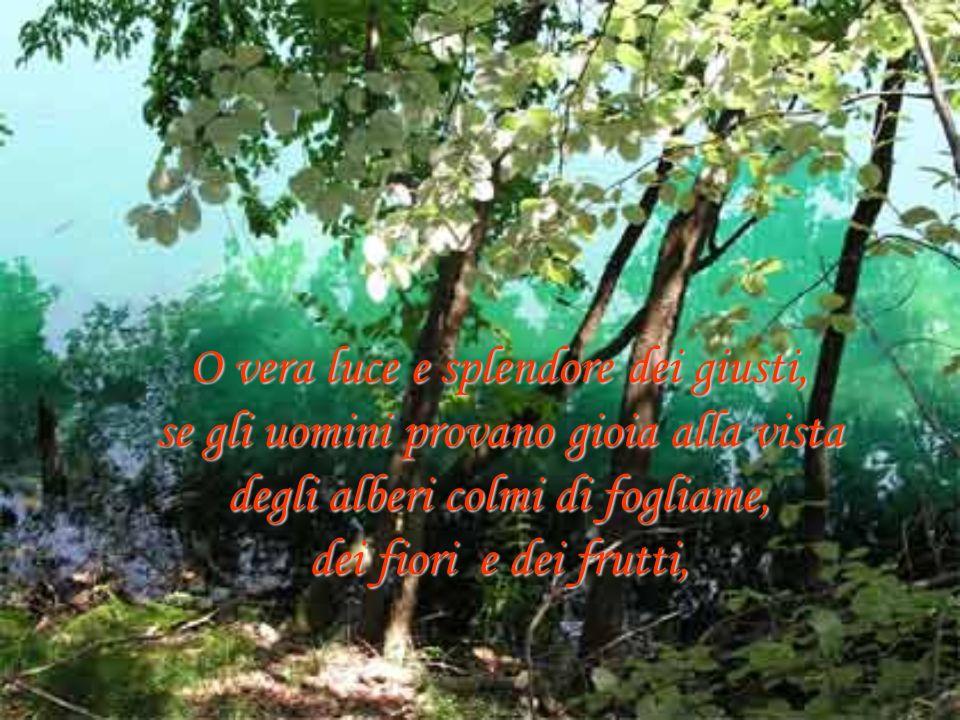 O vera luce e splendore dei giusti, se gli uomini provano gioia alla vista degli alberi colmi di fogliame, dei fiori e dei frutti,
