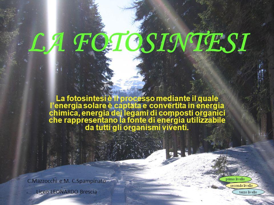 EDITRICE LA SCUOLA – Nuova Secondaria 2009-2010 © Tutti i diritti riservati La fase luminosa, serie di reazioni luce-dipendenti che avvengono sulla membrana dei tilacoidi.