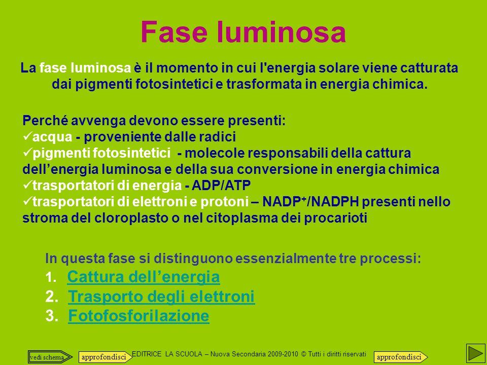 EDITRICE LA SCUOLA – Nuova Secondaria 2009-2010 © Tutti i diritti riservati La fase luminosa è il momento in cui l energia solare viene catturata dai pigmenti fotosintetici e trasformata in energia chimica.