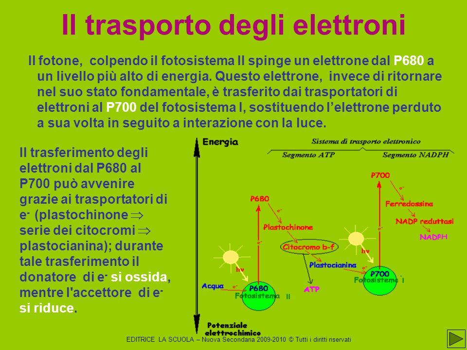 EDITRICE LA SCUOLA – Nuova Secondaria 2009-2010 © Tutti i diritti riservati Il fotone, colpendo il fotosistema II spinge un elettrone dal P680 a un livello più alto di energia.