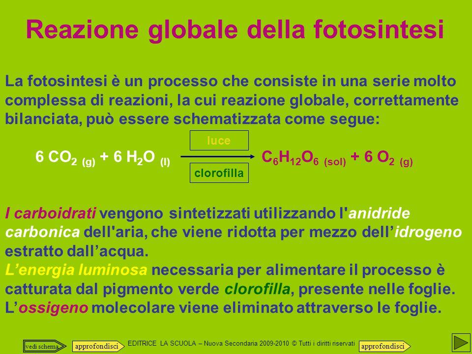 EDITRICE LA SCUOLA – Nuova Secondaria 2009-2010 © Tutti i diritti riservati La fotosintesi è un processo che consiste in una serie molto complessa di reazioni, la cui reazione globale, correttamente bilanciata, può essere schematizzata come segue: 6 CO 2 (g) + 6 H 2 O (l) C 6 H 12 O 6 (sol) + 6 O 2 (g) I carboidrati vengono sintetizzati utilizzando l anidride carbonica dell aria, che viene ridotta per mezzo dellidrogeno estratto dallacqua.