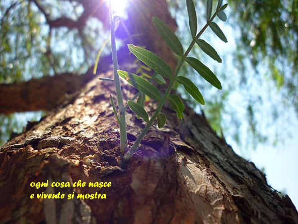Testo ispirato a S. Agostino Musica: Italo Bianchi