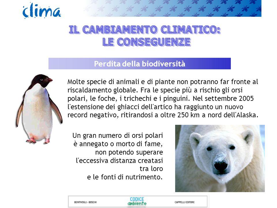 Molte specie di animali e di piante non potranno far fronte al riscaldamento globale. Fra le specie più a rischio gli orsi polari, le foche, i trichec