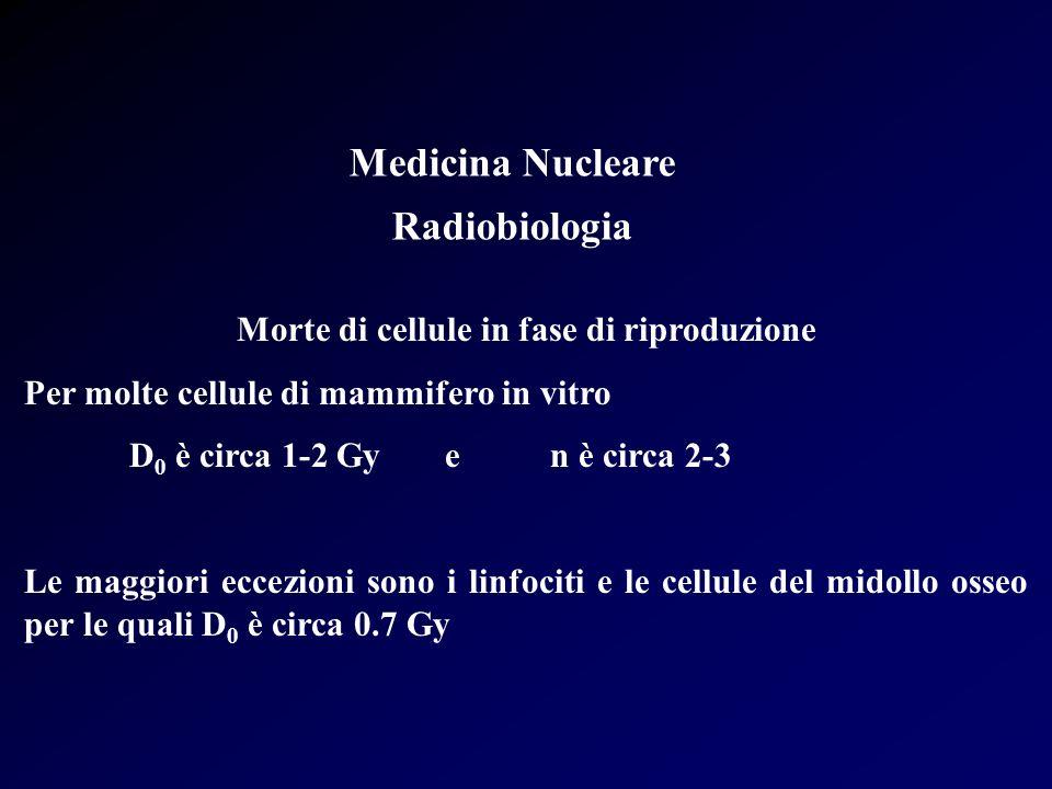 Medicina Nucleare Radiobiologia Morte di cellule in fase di riproduzione Per molte cellule di mammifero in vitro D 0 è circa 1-2 Gyen è circa 2-3 Le m