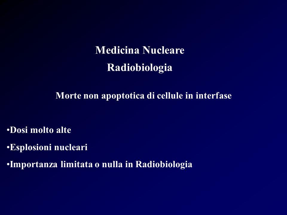 Medicina Nucleare Radiobiologia Morte non apoptotica di cellule in interfase Dosi molto alte Esplosioni nucleari Importanza limitata o nulla in Radiob