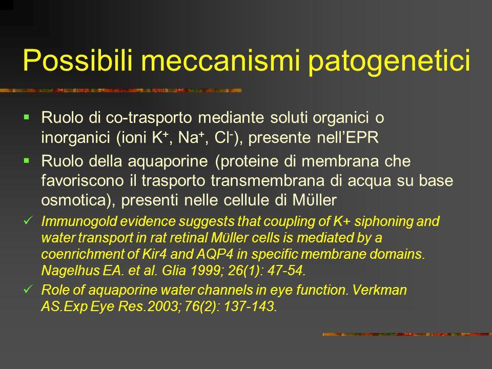 Possibili meccanismi patogenetici Ruolo di co-trasporto mediante soluti organici o inorganici (ioni K +, Na +, Cl - ), presente nellEPR Ruolo della aq