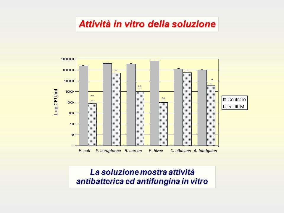 E. coli P. aeruginosa S. aureus E. hirae C. albicans A. fumigatus ** * Attività in vitro della soluzione La soluzione mostra attività antibatterica ed