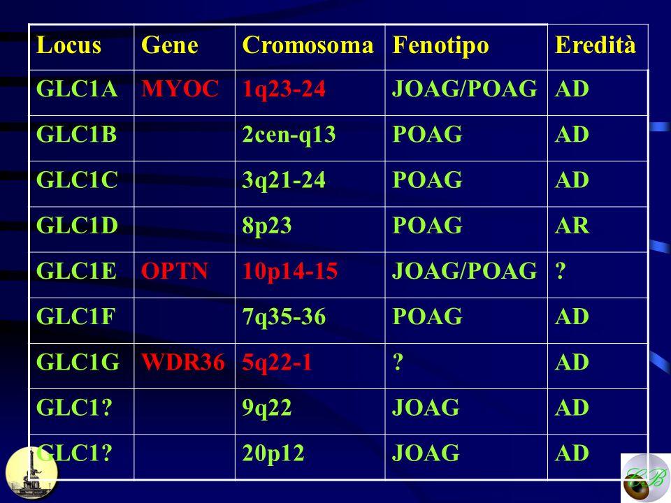 LocusGeneCromosomaFenotipoEredità GLC1AMYOC1q23-24JOAG/POAGAD GLC1B2cen-q13POAGAD GLC1C3q21-24POAGAD GLC1D8p23POAGAR GLC1EOPTN10p14-15JOAG/POAG? GLC1F
