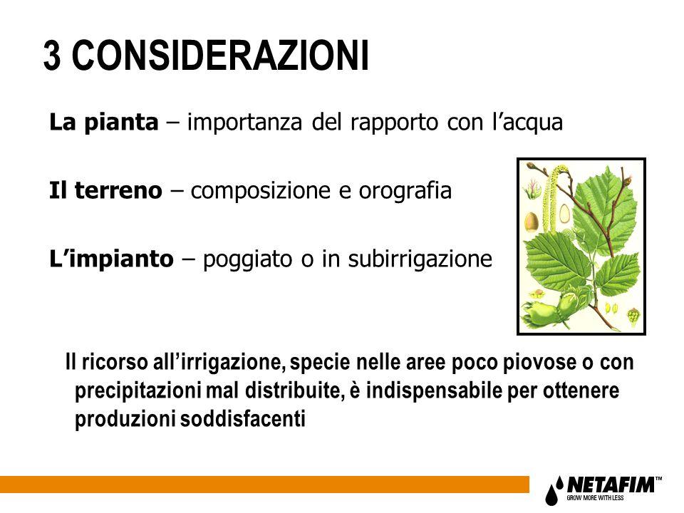 3 CONSIDERAZIONI La pianta – importanza del rapporto con lacqua Il terreno – composizione e orografia Limpianto – poggiato o in subirrigazione Il rico