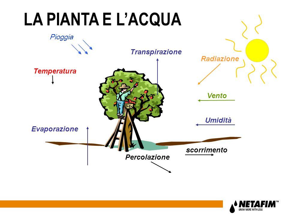 Evaporazione Transpirazione Percolazione Temperatura Radiazione Umidità Vento scorrimento Pioggia LA PIANTA E LACQUA
