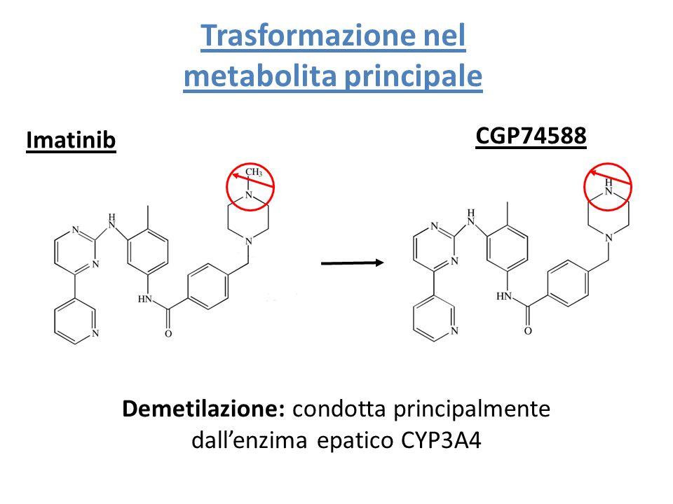 Imatinib CGP74588 Demetilazione: condotta principalmente dallenzima epatico CYP3A4 Trasformazione nel metabolita principale