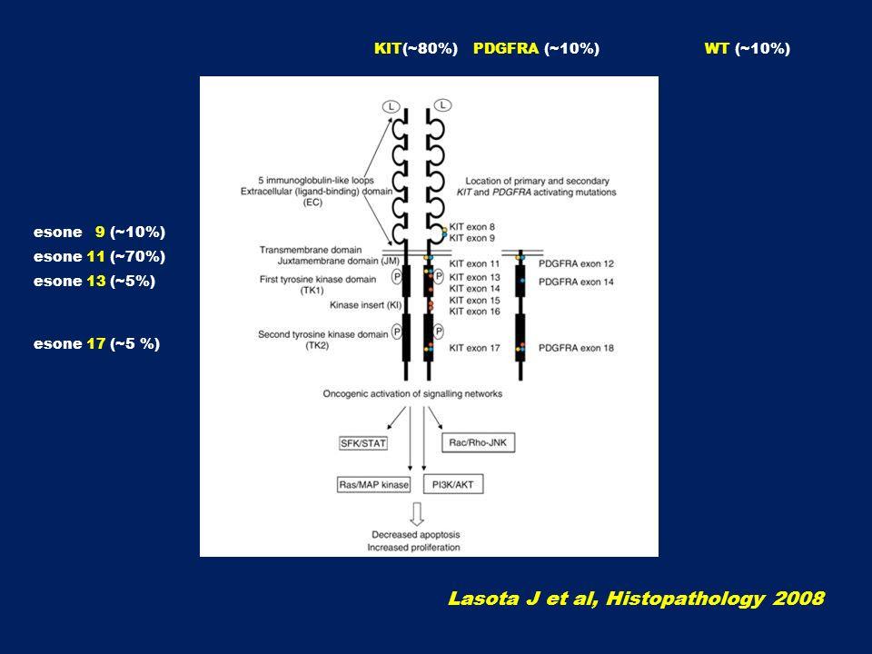 Lasota J et al, Histopathology 2008 esone 9 (~10%) esone 11 (~70%) esone 13 (~5%) esone 17 (~5 %) PDGFRA (~10%)KIT(~80%)WT (~10%)