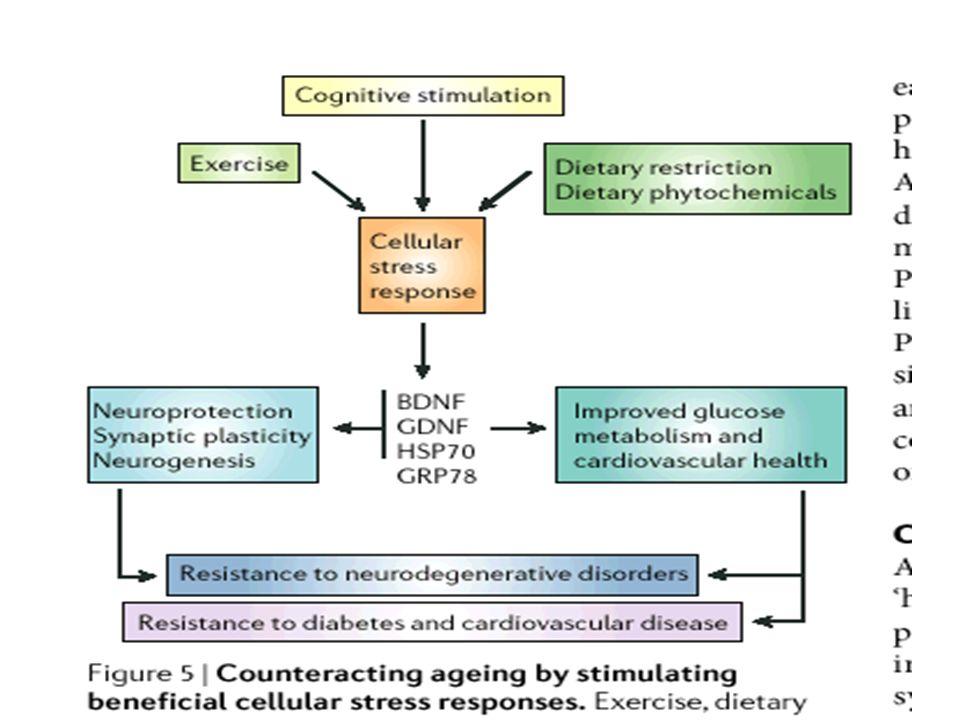Proposizioni metateoriche sviluppo come cambiamento delle capacità di adattamento –adattamento selettivo –dinamica di guadagno - perdita plasticità e cambiamento età - correlato –potenzialità dello sviluppo e differenze intraindividuali –capacità di base e capacità di sviluppo innovazioni metodologiche