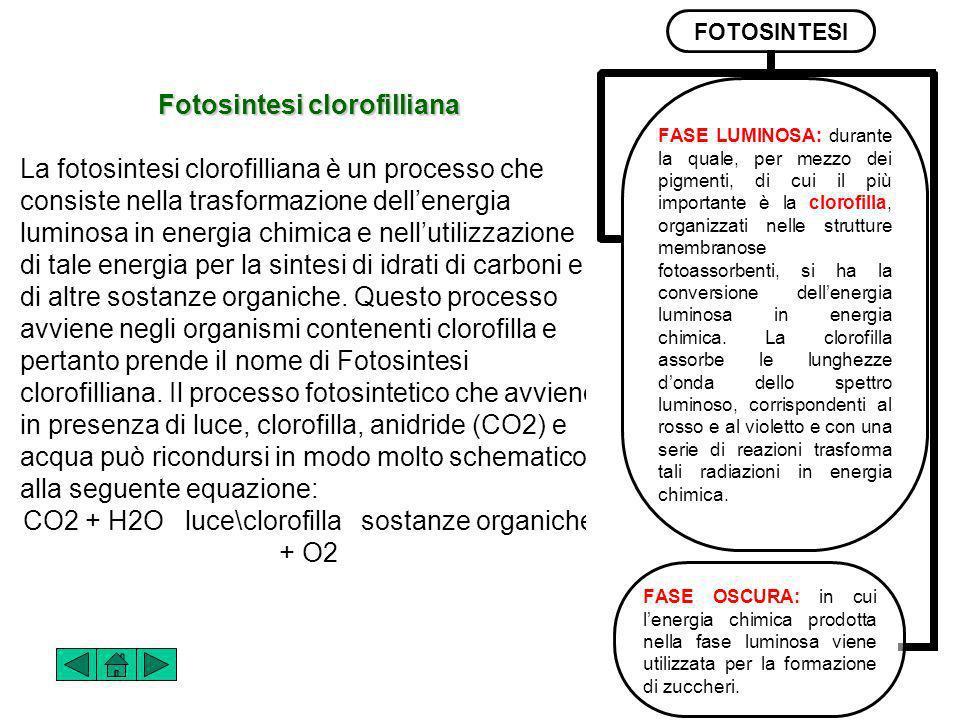Fotosintesi clorofilliana La fotosintesi clorofilliana è un processo che consiste nella trasformazione dellenergia luminosa in energia chimica e nellutilizzazione di tale energia per la sintesi di idrati di carboni e di altre sostanze organiche.