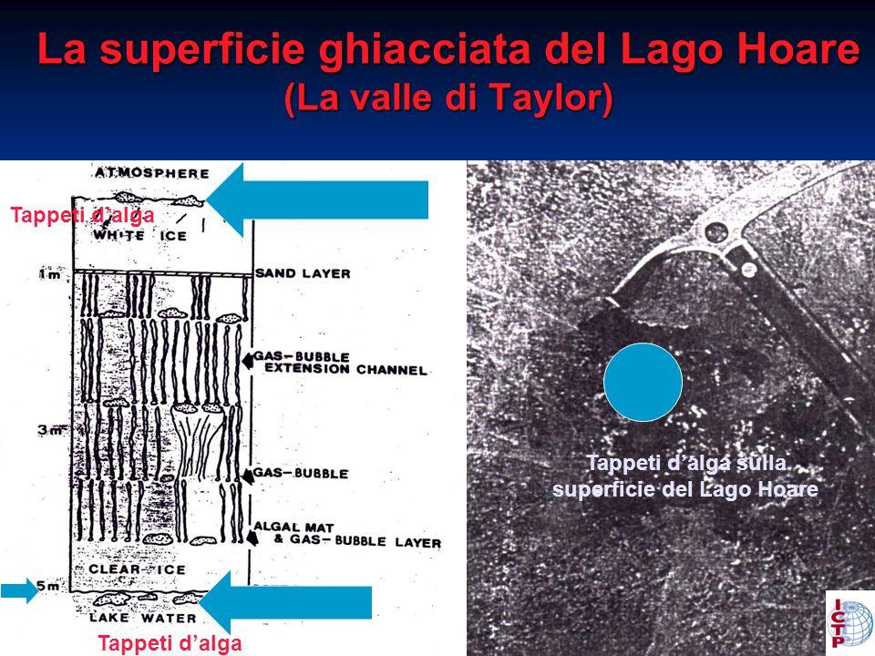 La superficie ghiacciata del Lago Hoare (La valle di Taylor) Tappeti dalga sulla superficie del Lago Hoare Tappeti dalga