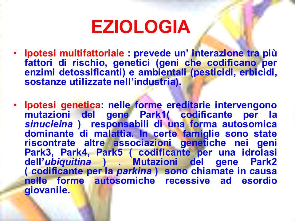 Ipotesi multifattoriale : prevede un interazione tra più fattori di rischio, genetici (geni che codificano per enzimi detossificanti) e ambientali (pe