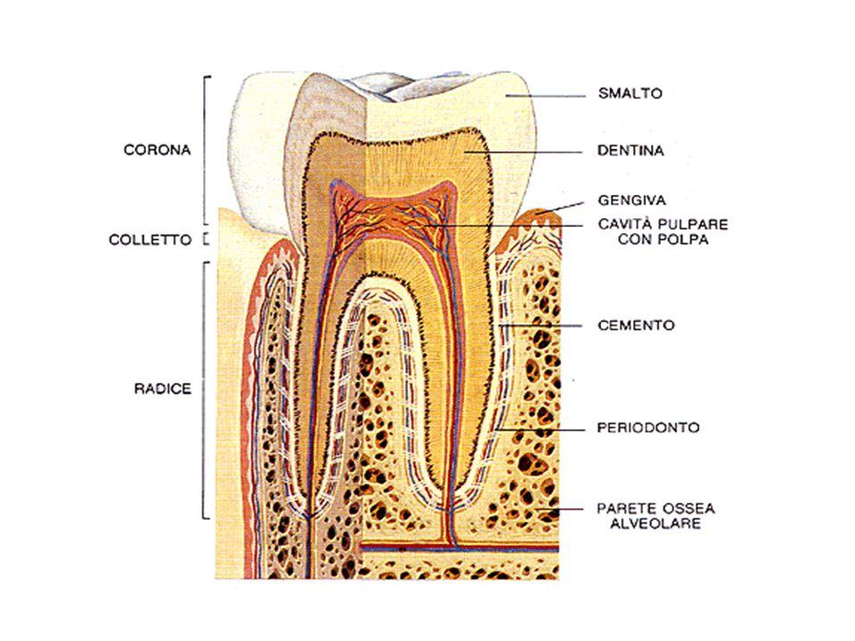 Evoluzione delle lesioni del complesso dente-parodonto.