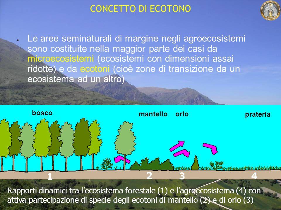 CONCETTO DI ECOTONO Le aree seminaturali di margine negli agroecosistemi sono costituite nella maggior parte dei casi da microecosistemi (ecosistemi con dimensioni assai ridotte) e da ecotoni (cioè zone di transizione da un ecosistema ad un altro) Rapporti dinamici tra lecosistema forestale (1) e lagroecosistema (4) con attiva partecipazione di specie degli ecotoni di mantello (2) e di orlo (3) 1 bosco 2 mantello 3 orlo 4 prateria