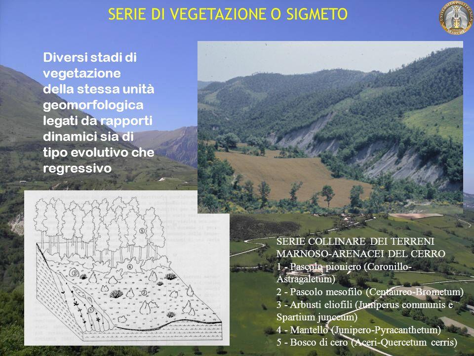 SERIE DI VEGETAZIONE O SIGMETO Diversi stadi di vegetazione della stessa unità geomorfologica legati da rapporti dinamici sia di tipo evolutivo che regressivo SERIE COLLINARE DEI TERRENI MARNOSO-ARENACEI DEL CERRO 1 - Pascolo pioniero (Coronillo- Astragaletum) 2 - Pascolo mesofilo (Centaureo-Brometum) 3 - Arbusti eliofili (Juniperus communis e Spartium junceum) 4 - Mantello (Junipero-Pyracanthetum) 5 - Bosco di cero (Aceri-Quercetum cerris)