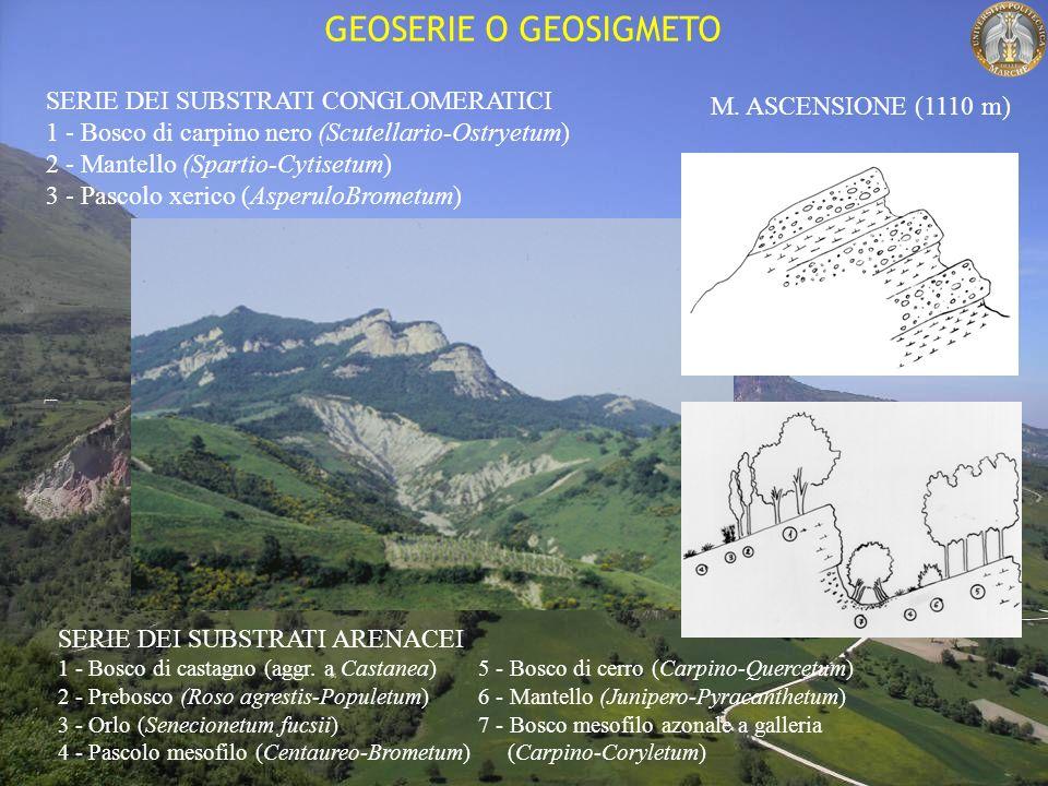 GEOSERIE O GEOSIGMETO SERIE DEI SUBSTRATI CONGLOMERATICI 1 - Bosco di carpino nero (Scutellario-Ostryetum) 2 - Mantello (Spartio-Cytisetum) 3 - Pascolo xerico (AsperuloBrometum) SERIE DEI SUBSTRATI ARENACEI 1 - Bosco di castagno (aggr.