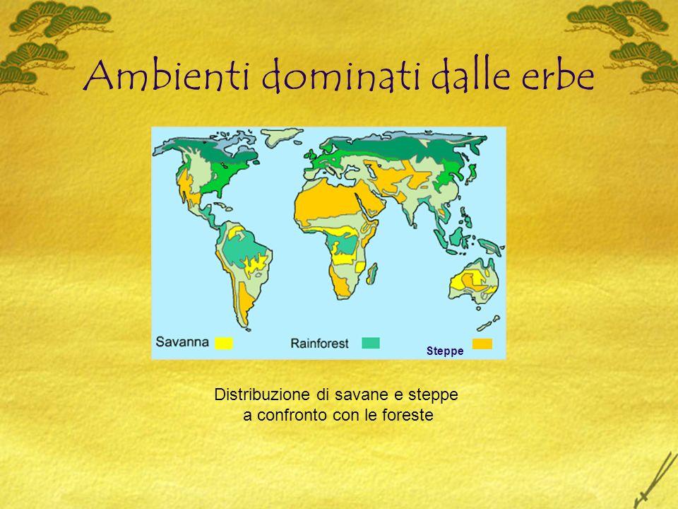 Ambienti dominati dalle erbe Distribuzione di savane e steppe a confronto con le foreste Steppe