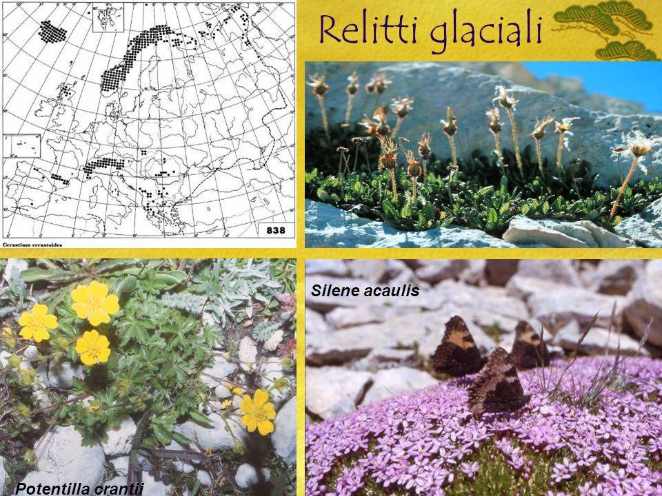 Relitti glaciali Potentilla crantii Silene acaulis Dryas octopetala
