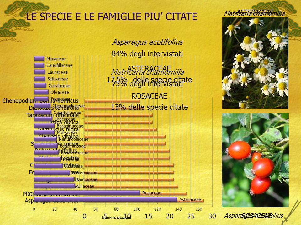 LE SPECIE E LE FAMIGLIE PIU CITATE Asparagus acutifolius 84% degli intervistati Matricaria chamomilla 75% degli intervistati Matricaria chamomilla Asparagus acutifolius ASTERACEAE ROSACEAE ASTERACEAE 17,5% delle specie citate ROSACEAE 13% delle specie citate