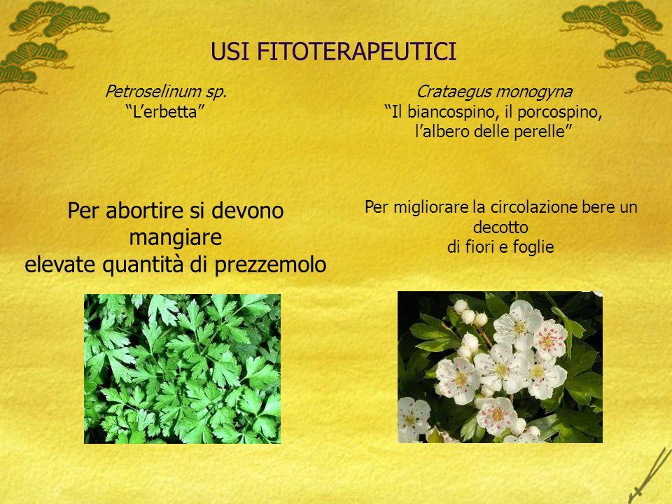 USI FITOTERAPEUTICI Per abortire si devono mangiare elevate quantità di prezzemolo Petroselinum sp.