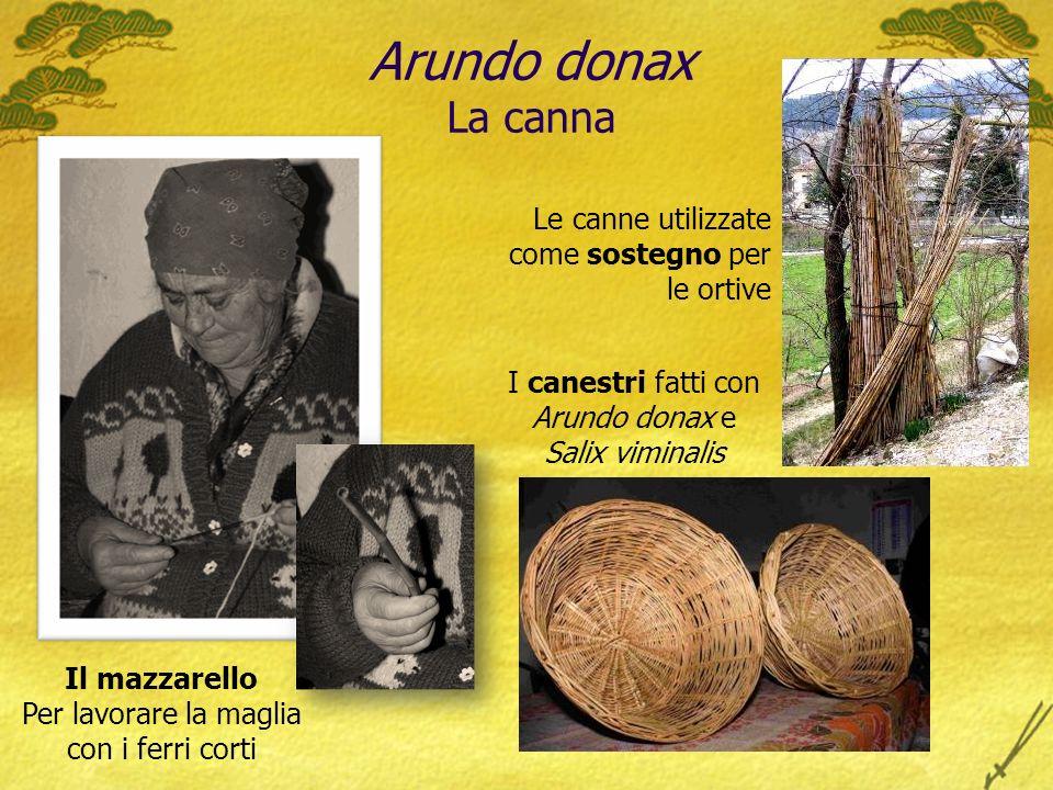 Arundo donax La canna Il mazzarello Per lavorare la maglia con i ferri corti Le canne utilizzate come sostegno per le ortive I canestri fatti con Arundo donax e Salix viminalis