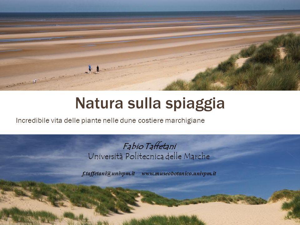 Natura sulla spiaggia Incredibile vita delle piante nelle dune costiere marchigiane Fabio Taffetani Università Politecnica delle Marche f.taffetani@univpm.itwww.museobotanico.univpm.it