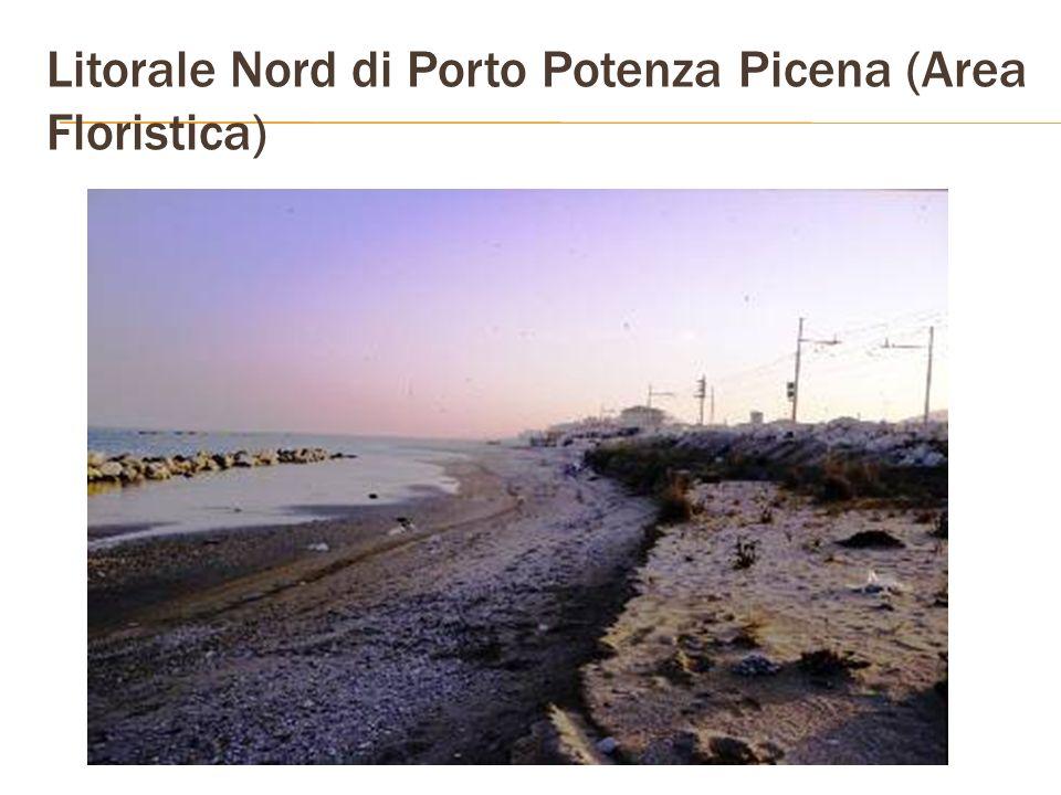 Litorale Nord di Porto Potenza Picena (Area Floristica)