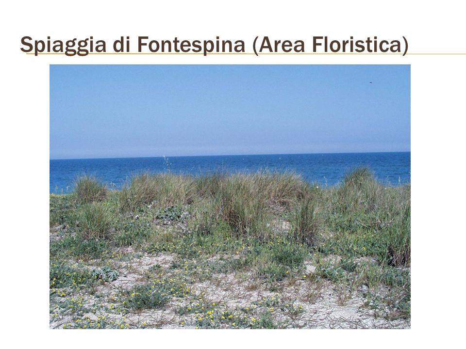 Spiaggia di Fontespina (Area Floristica)