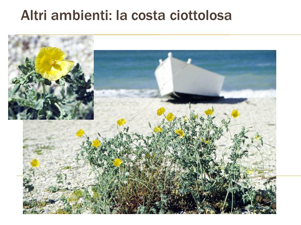 Altri ambienti: la costa ciottolosa