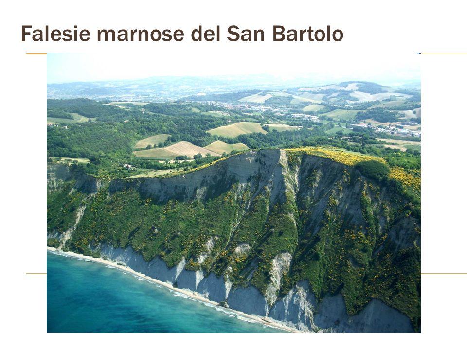 Falesie marnose del San Bartolo
