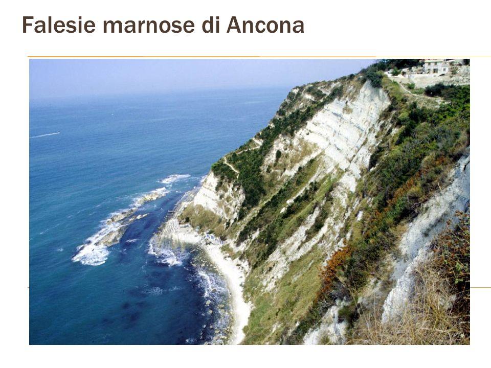Falesie marnose di Ancona