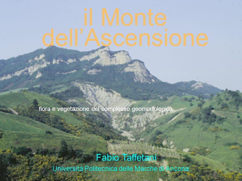 il Monte dellAscensione flora e vegetazione del complesso geomorfologico Università Politecnica delle Marche di Ancona Fabio Taffetani