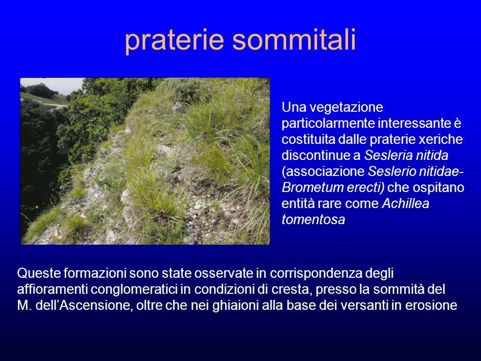 praterie sommitali Queste formazioni sono state osservate in corrispondenza degli affioramenti conglomeratici in condizioni di cresta, presso la sommità del M.